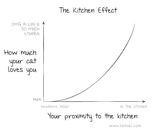 the kitchen effect, how much your cat loves you